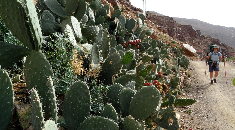 Треккинг в Марокко и восхождение на Тубкаль — отчет
