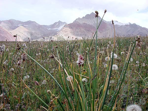 Луковая поляна