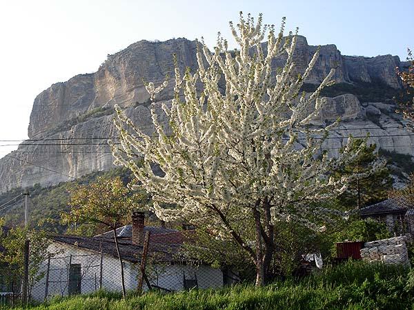 Цветущий горный Крым весной