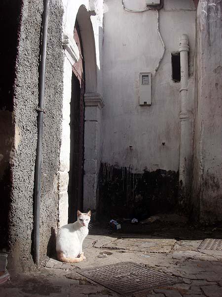 В Медине (старом городе) Касабланки