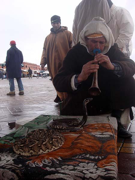 Заклинатель змей на площади Джема аль Фна