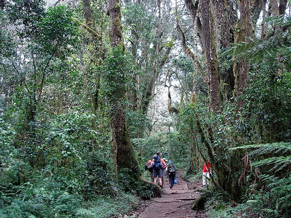 Африканские джунгли в начале восхождения на Килиманджаро