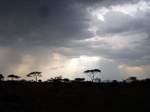 Саванна в Африке