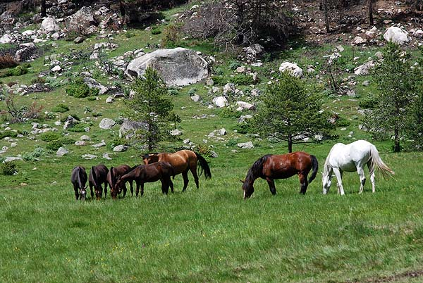 Лошади у подножья Эльбруса